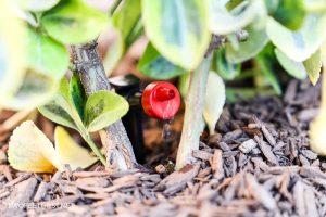 drip emitter for drip irrigation