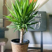 DIY Basket Weave Planter