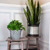 DIY plant stand from upcycled thrifted bar stool