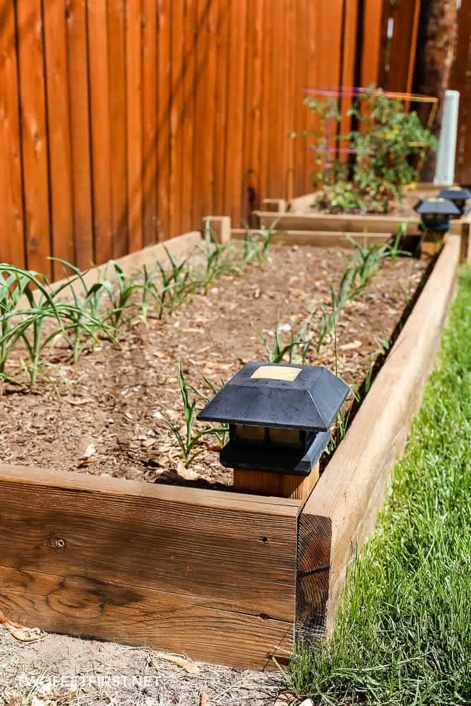 two raised garden beds in a backyard