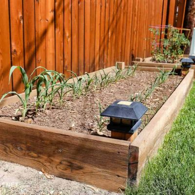 garden boxes with plants planted